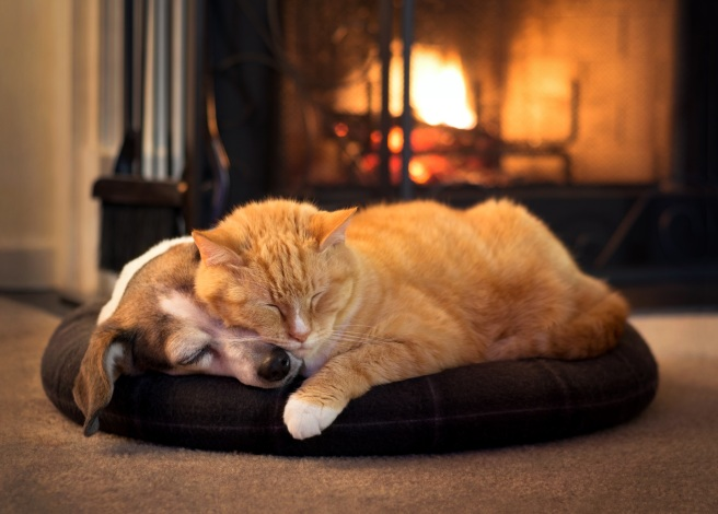 cat and dog by the fireplace