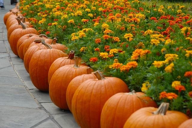 pumpkin-2868748_640
